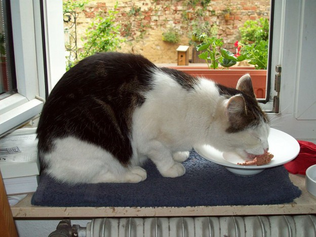 Cat eating a meal Carsondelake [CC BY-SA 3.0 (http://creativecommons.org/licenses/by-sa/3.0)], via Wikimedia Commons